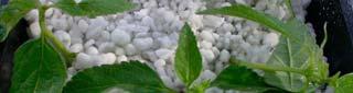 Cultivo Hidroponia