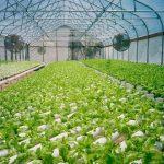 Agricultura Hidroponia